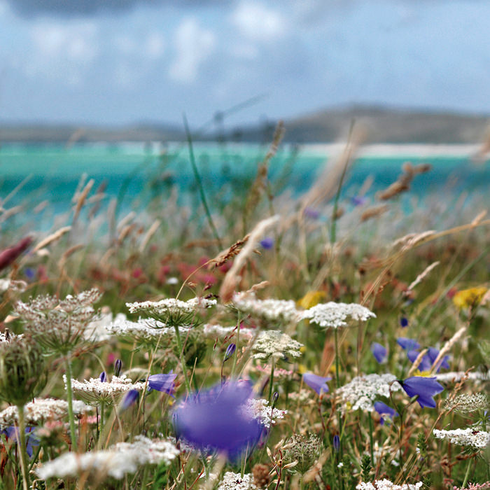 Ian Lawson - Sea Meadow