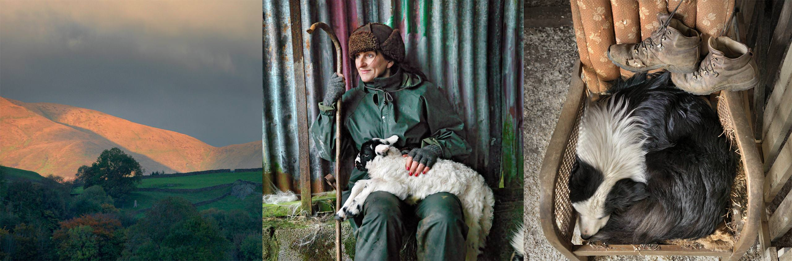 Ian Lawson - Shepherdess